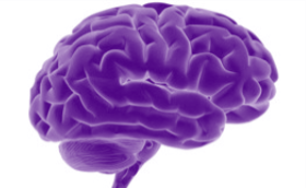 Change your mind - picture of a purple brain